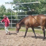 Horses for Courses® with Lisa Brice